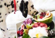 Choosing Dog Food