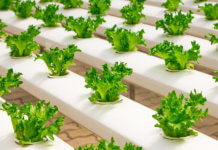 Hydroponic herb garden system - Food Finds Asia