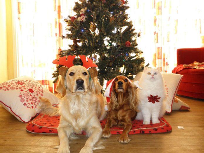8 Paw-dorable Christmas Decor Items
