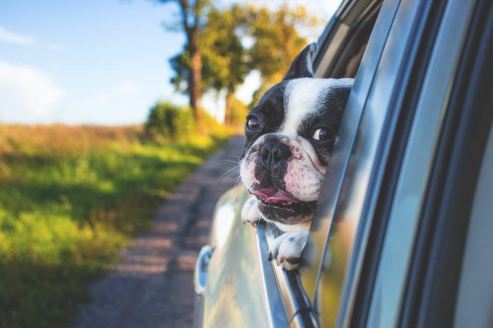 Should Your Car Insurance Cover Your Pets?